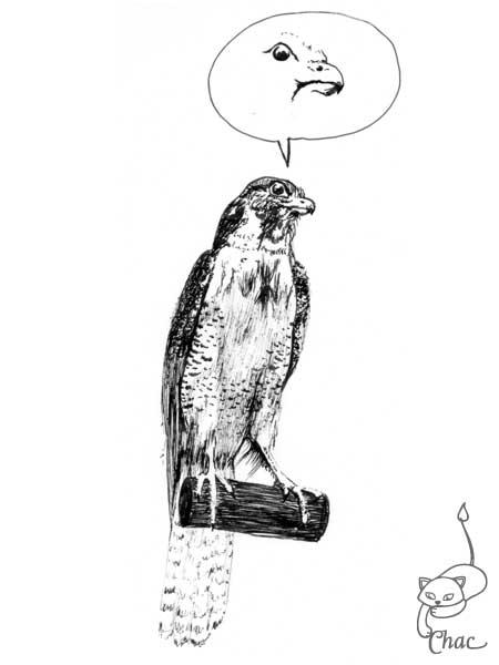 Faucon chac - Dessiner un faucon ...